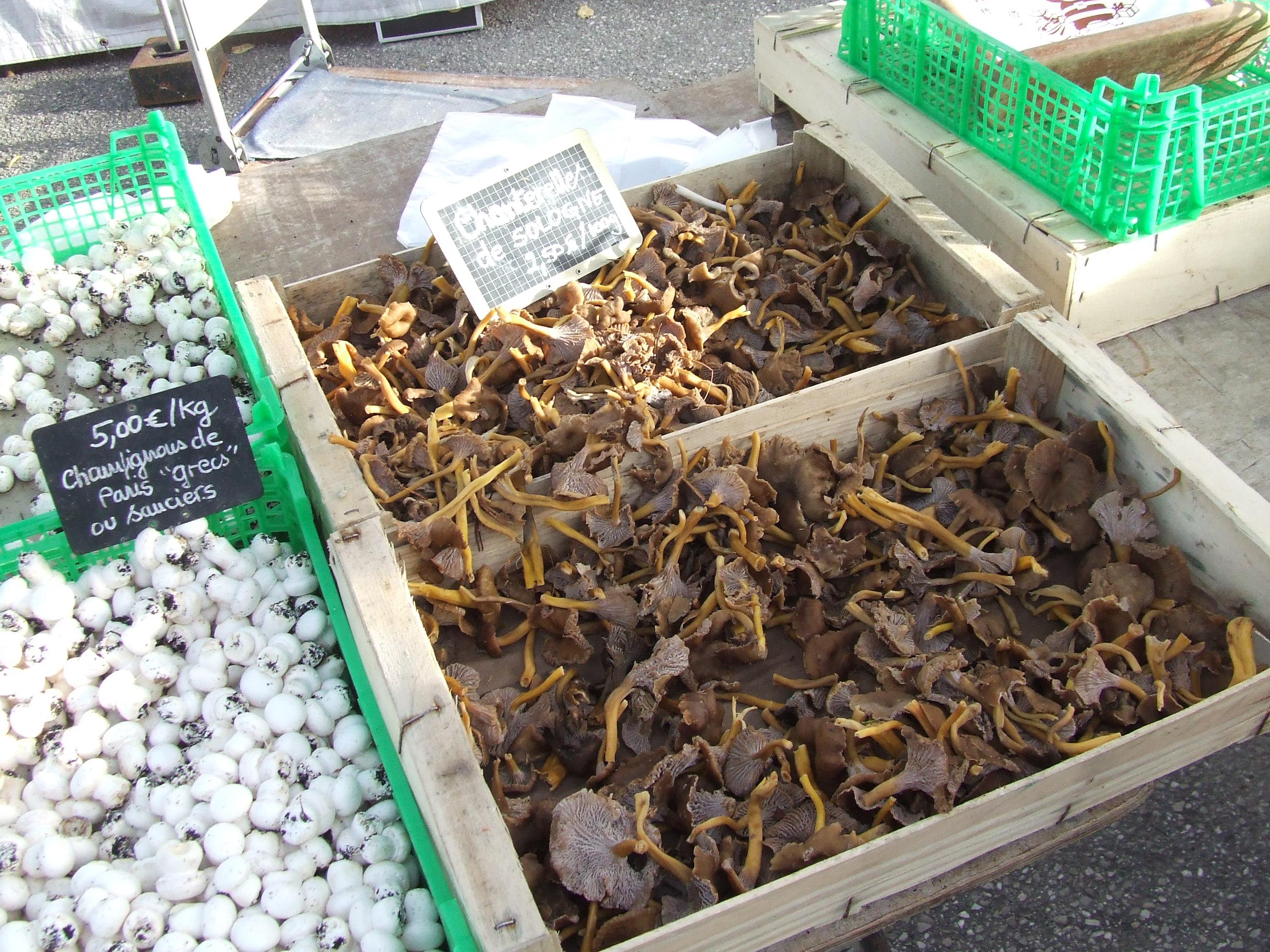 Bazaar 1 pcs Le moulin /à vent la coccinelle rouge et labeille jaune con/çoit la d/écoration de jardin denfants de moulin /à vent