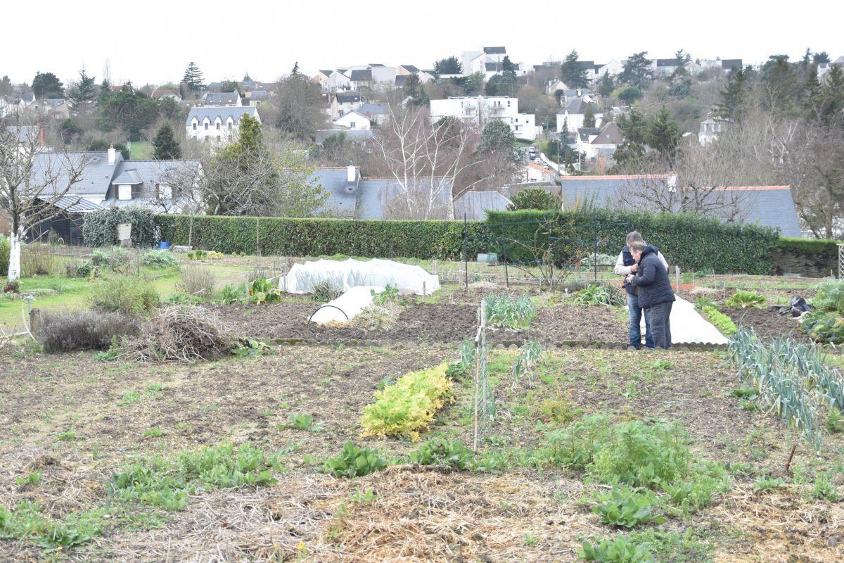 Occuper sa retraite en jardinant