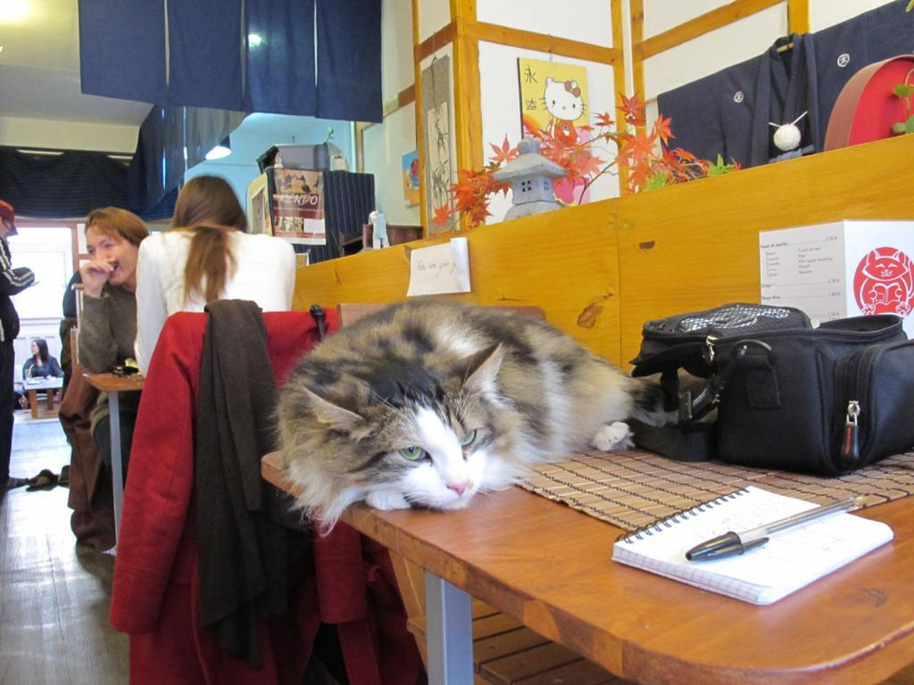 Plutôt relax, le chat au Nyanko Café... (Photo tmv)