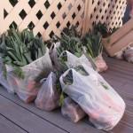 Les abeilles viennent retirer leurs sacs de carottes