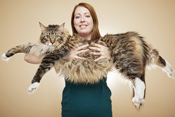 Ludo--Longest-Cat