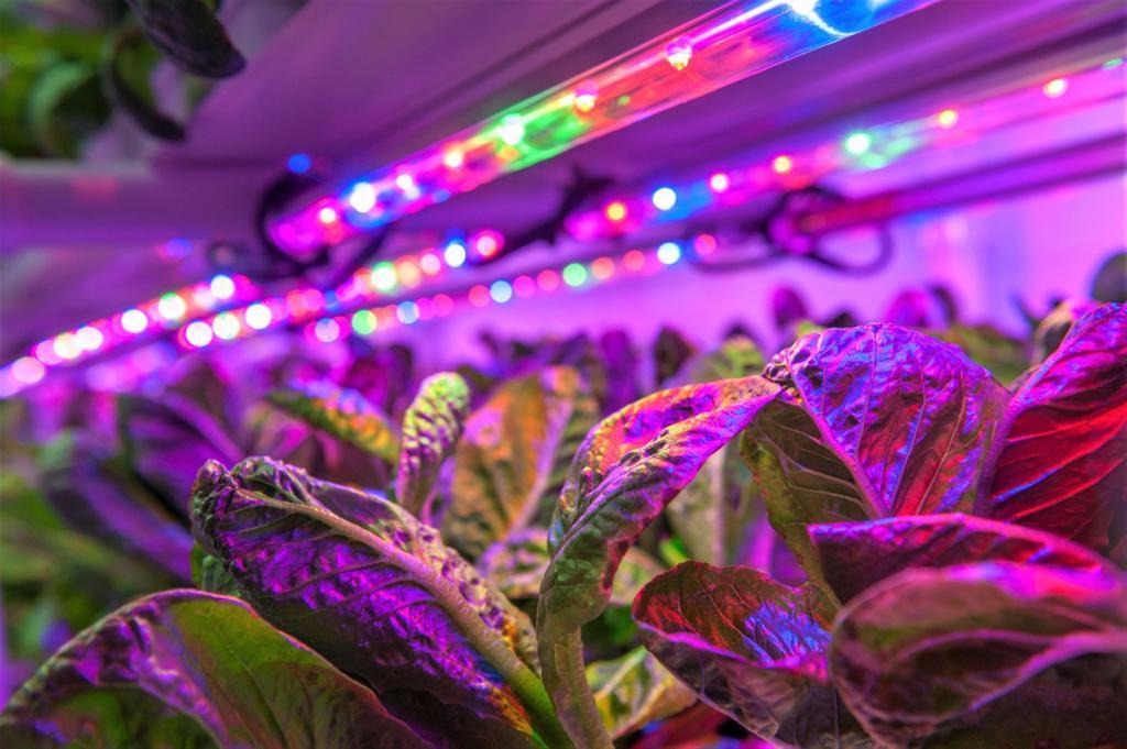 Une ferme bioponique vue de l'intérieur (Photo Géo Pousse Tout)